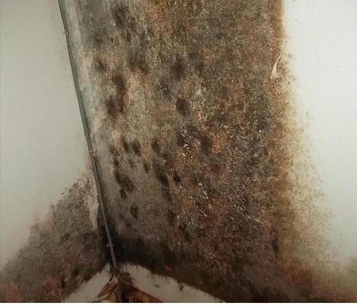 Mold in Grand Prairie