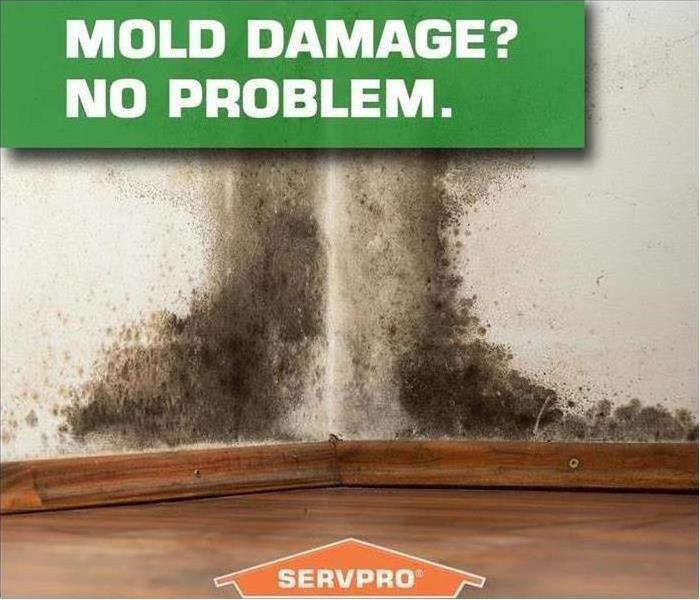 Mold Damage? No Problem!
